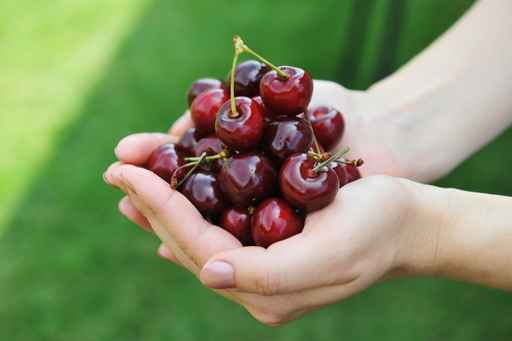 Freshly  cherries